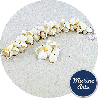 8586 - Drilled - White Cockle - Sea Shell Garland